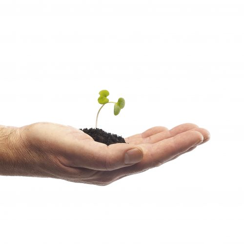 Male hand holding pile of soil with seedling growing on white background concept photography