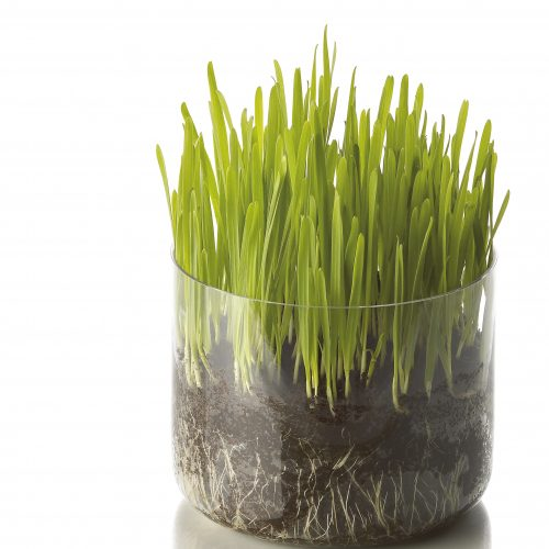 Glass jar with soil roots and grass growing concept photography